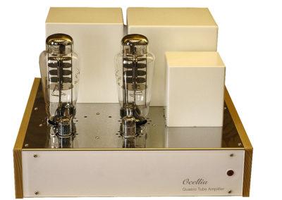 Amplification Ocellia